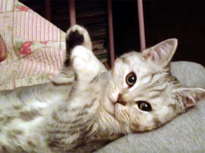 両手を上げたままの子猫