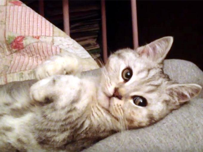 お手々を下げたポーズの子猫