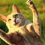 猫パンチのベスト動画集! 可愛い子猫から、世界チャンピオン級まで♪