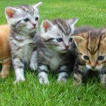 猫好き必見! おもしろ動画まとめ♪ 爆笑・癒し・可愛いニャンコたち