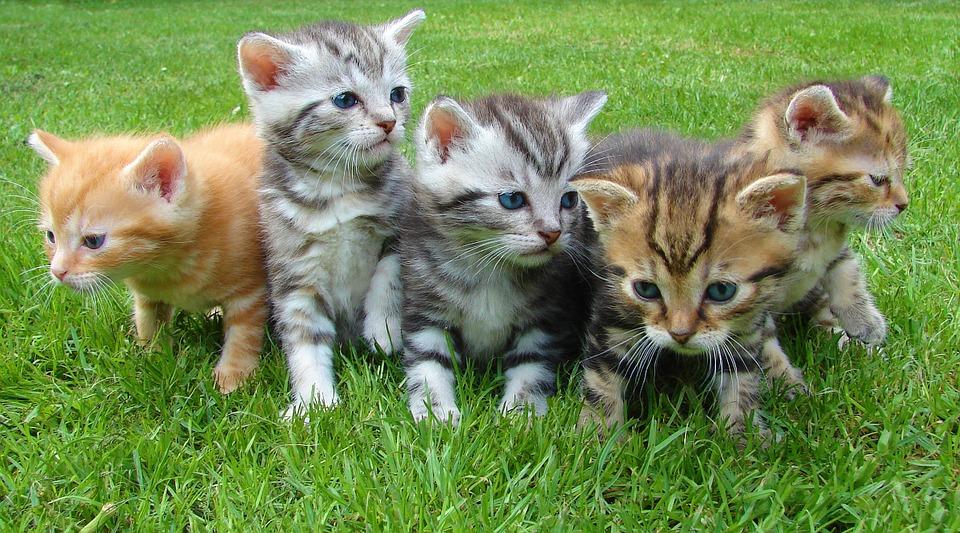 子猫たちの写真