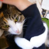 腕に抱きついて離れない「抱きつき猫」。甘えた鳴き声も可愛すぎ!