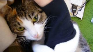 腕に抱きついて離れない「だきつき猫」。甘えた鳴き声も可愛すぎ!