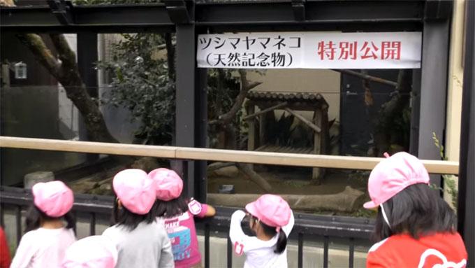 京都市動物園でツシマヤマネコを公開