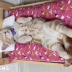 へそ天全開の猫たち♪ 無防備な寝姿が可愛い! ほっこり猫動画