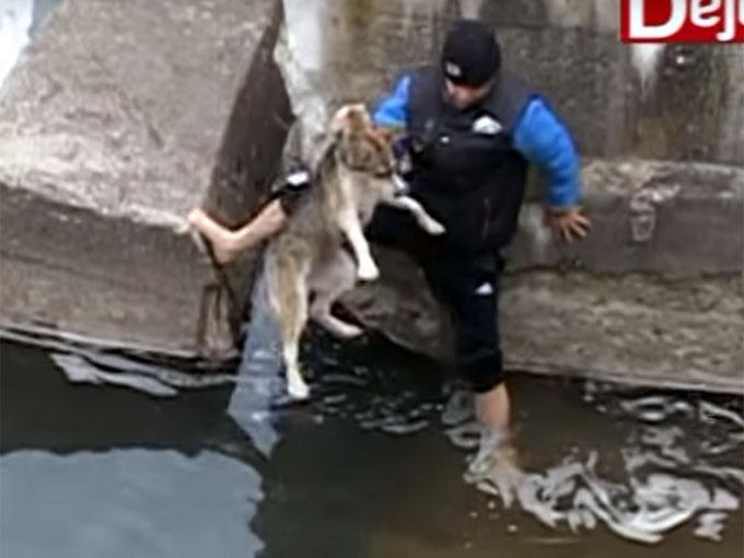 川から救助される犬