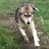 「ありがとうワン!」川から救助された犬が、恩人に全身で感謝する!