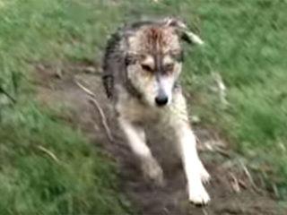 川から救助された犬が、助けてくれた人に全身で感謝を表現する!