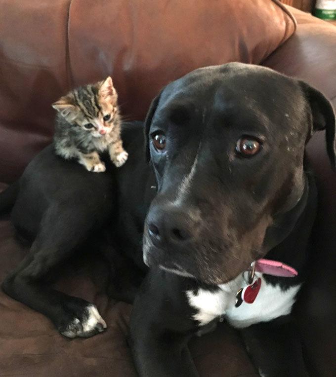 仲良しの犬と子猫