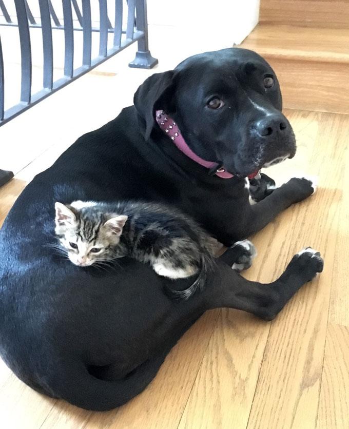 犬に甘える子猫