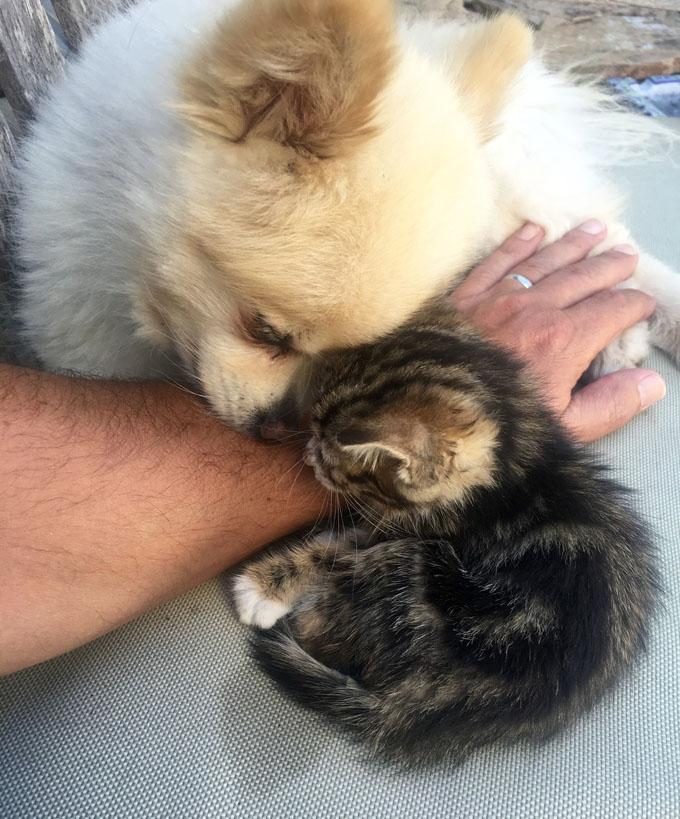 子猫とポメラニアン