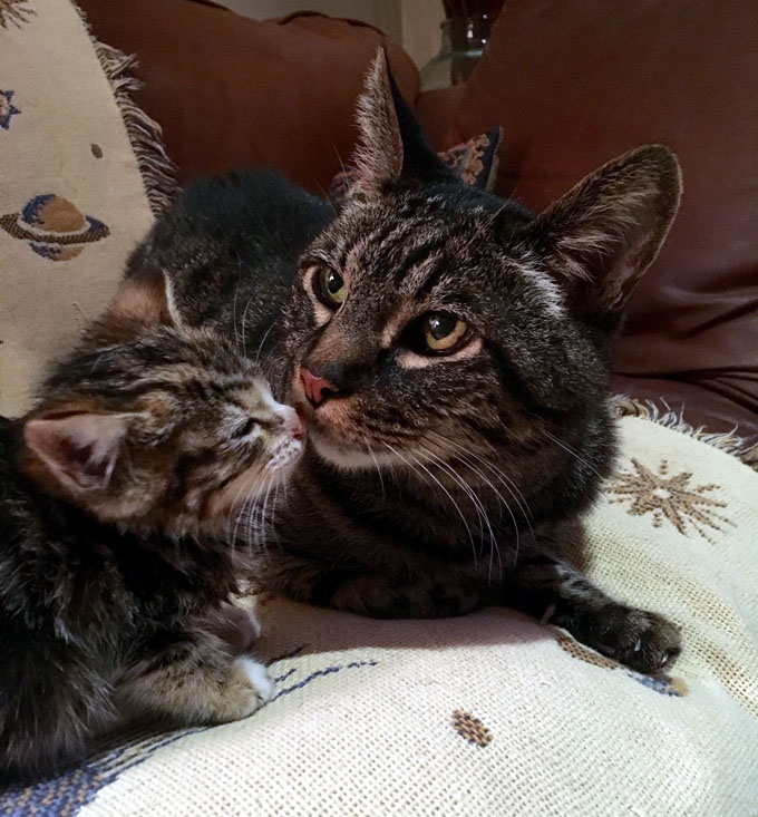 先住猫とも仲良しになった子猫