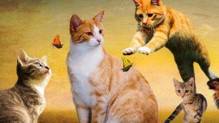 爆笑の猫動画! コントのようなズッコケ、可愛い子猫、ハプニング編