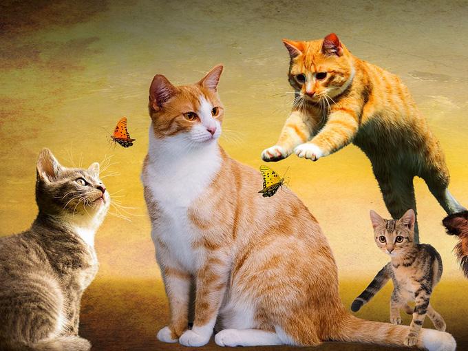 ズッコケる猫、可愛い子猫、ハプニング映像