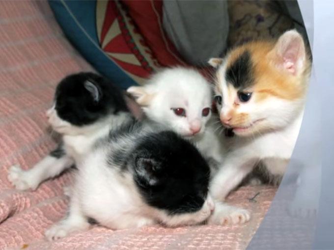 4匹のきょうだい猫