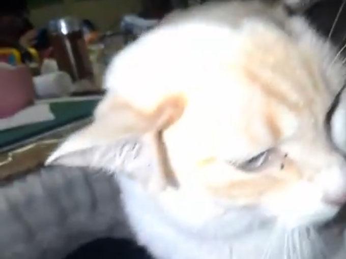 二股に別れた猫の耳1