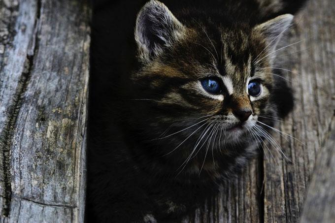 保護猫の子猫のイメージ
