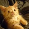 醜いと言われ、拒否され続けた猫のロメオ。今は世界中から愛される猫に!