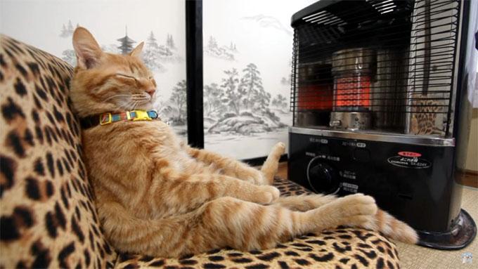 ストーブの前で暖まる猫