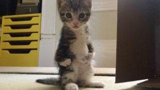 4本足で歩けない猫。前足に障がいを持つカンガが、愛と勇気を与えてくれる!