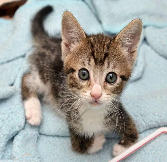 前足に障がいを持った猫カンガ