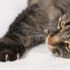 猫の爪切りの上手なコツ。猫がおとなしくなって嫌がらない方法は?
