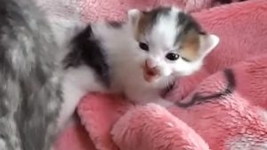 「ママひどいにゃ!」 キックされて怒る子猫と、おろおろと謝る母猫