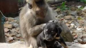 サルが子犬と猫にグルーミング♪ 見ているだけで癒やされる動画