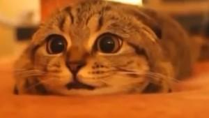 猫がホラー映画を見ている姿が超かわいい♪「怖いニャ~!」