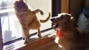 超高速の猫パンチ動画! 生音が「パンパンパン!」と響いています!
