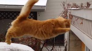 猫のジャンプ失敗! 雪に滑って、ずっこける猫