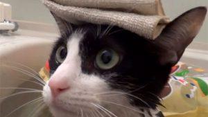 お風呂が大好き! 猫のむーちゃん♪ タオルを頭に乗せた姿が可愛い!