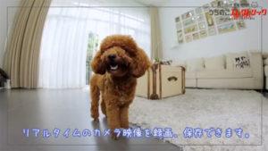 カメラ付・ペット自動給餌器カリカリマシーン。スマホで愛猫・愛犬を見守れます!