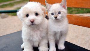 猫と犬のおもしろ動画まとめ。仲良し、遊び、爆笑編♪